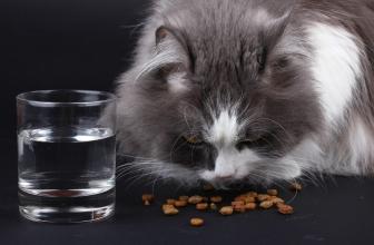 La comida seca o húmeda para gatos. Consejos para su compra
