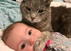 Doce inconvenientes de tener un gato en casa. Entra y descubre