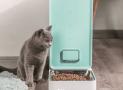Lo que debes saber de los comederos automáticos para gatos