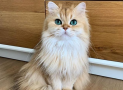 10 Beneficios de tener un gato en tu casa