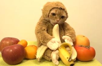 ¿Los gatos pueden comer plátanos? Entra y descúbrelo