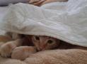 ¿Cuál es la temperatura ambiente ideal para los gatos en invierno?