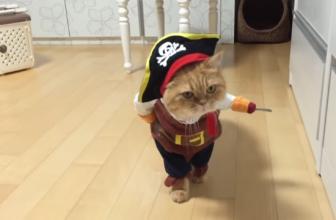 Snapchat para gatos. Nuevos filtros para tu gato