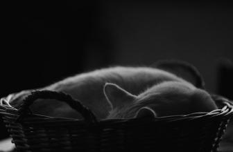 10 mejores camas para gatos. Guía para comprar en 2018.