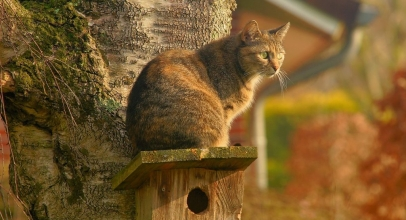 Gatos en el campo y el jardín o gatos de casa