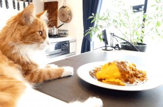 Qué hacer para que mi gato no se suba a la encimera de la cocina.