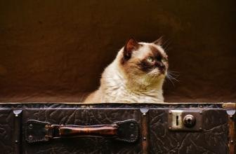 Mudanza con gato a una nueva casa. Pasos a seguir