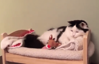 ¿Dónde debe dormir un gato? ¿Contigo o en su cama?