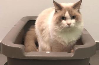 👌Síntomas y soluciones al estreñimiento de tu gato