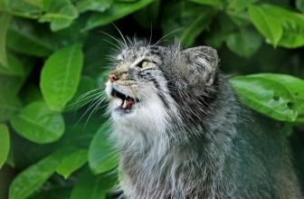 Mi gato maulla mucho por la noche. Razones y solución