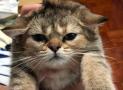 9 cosas que tu gato odia y puedes no saberlo