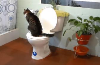 Mi gato orina en toda la casa. Causas y soluciones
