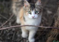 Cosas increíbles que pueden hacer nuestros gatos