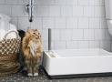 Solución a los problemas con la caja de arena para gatos