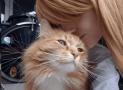 10 Expresiones de cariño de los gatos🐱hacia sus dueños