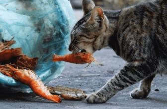 ¿Pueden comer gambas los gatos? Entra y descúbrelo