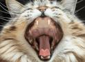 6 causas de las úlceras labiales y bucales en gatos