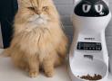 7 Beneficios de comprar un comedero automático de comida para gatos🐱