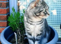 8 Trucos👌para evitar que tu gato escarbe tus macetas