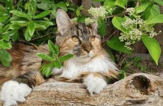 Gatos de interior o de exterior. Ventajas e inconvenientes