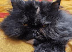 8 Consejos☝️sencillos para calmar a tu gato cuando está nervioso