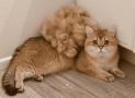 Cómo ayudar a tu gato con la muda de pelo en otoño