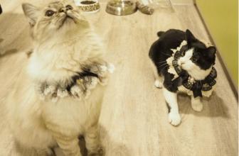 Cómo alimentar bien a tu gato. Evita errores