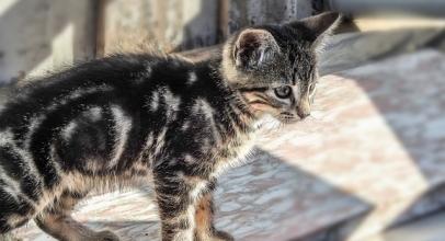 Lo qué debes saber sobre el hipertiroidismo en los gatos