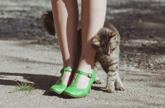 ¿ Por qué los gatos prefieren a una persona de la familia?