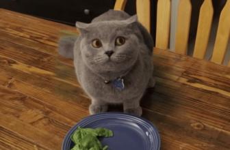 ¿Cuanto tiempo puede aguantar un gato sin comer ni beber?