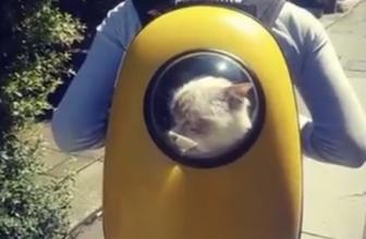 Mochilas de astronauta para gatos al mejor precio.