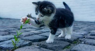 Cómo elegir a tu gato. Traer un gato a casa