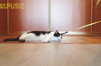 ¿Crees que es fácil pasear con un gato? Entra y compruébalo