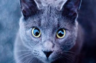 Cómo ven los gatos ¡Conoce las características de la visión de tu gato!