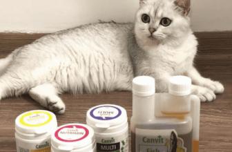 11 Vitaminas y minerales esenciales para los gatos